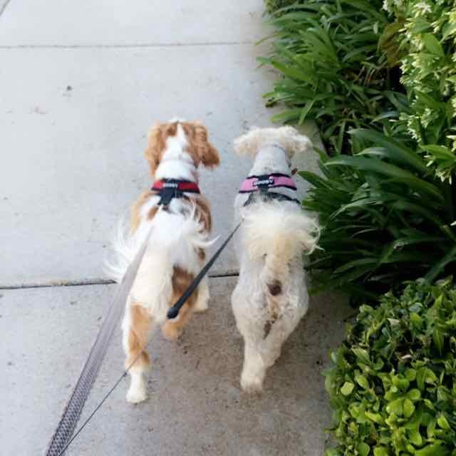 Gracie and Lucy 11.jpg