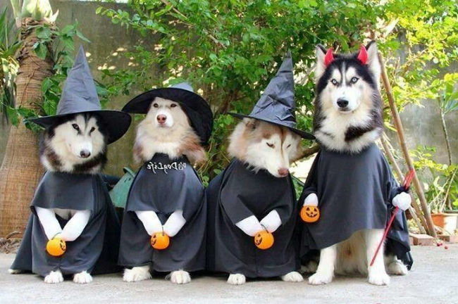 funny-dog-costumes-witch.jpg
