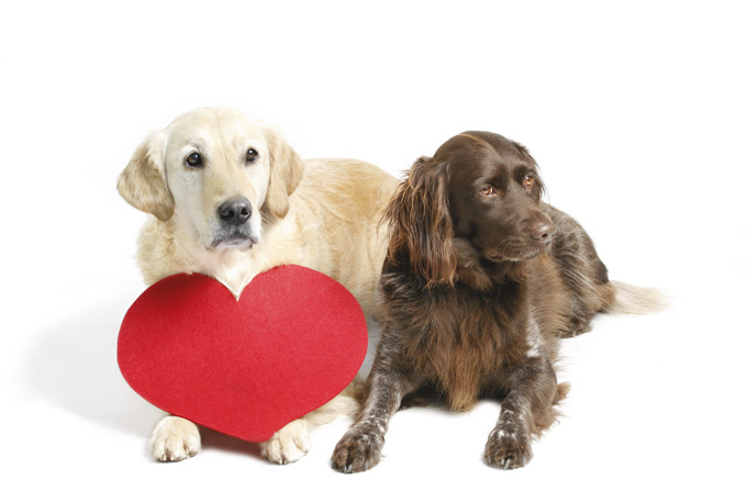 valentines-day-dogs.jpg