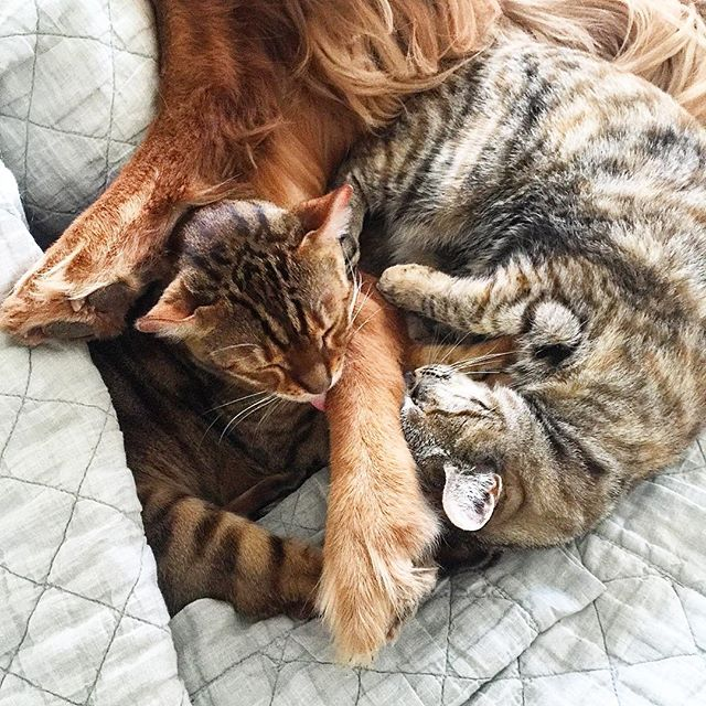 Now Introducing.... - Karma Kitty Care!We are dog people and cat people and we love kitties just as much as we love pups. We now offer regular weekly litter box care and kitty enrichment exercising.