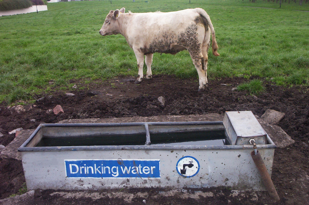 drinking water L.jpg
