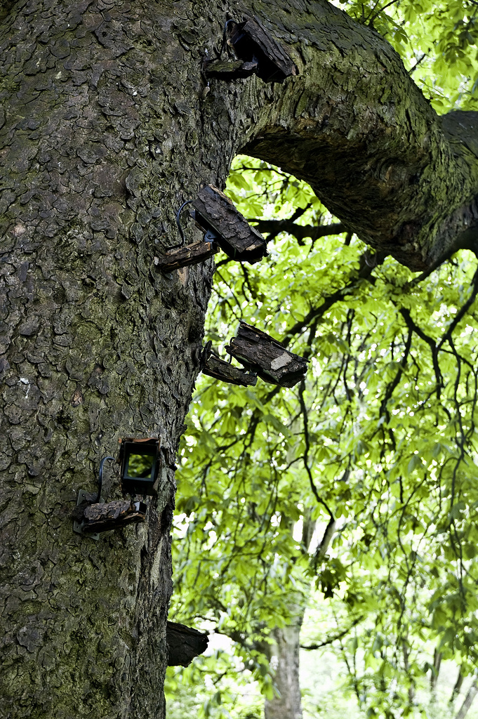 closed circuit treevision