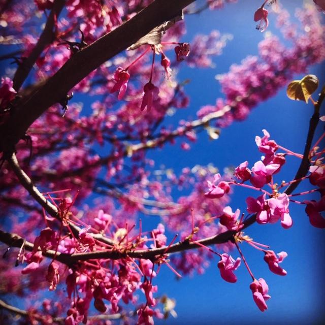 Spring_buds_2.jpg