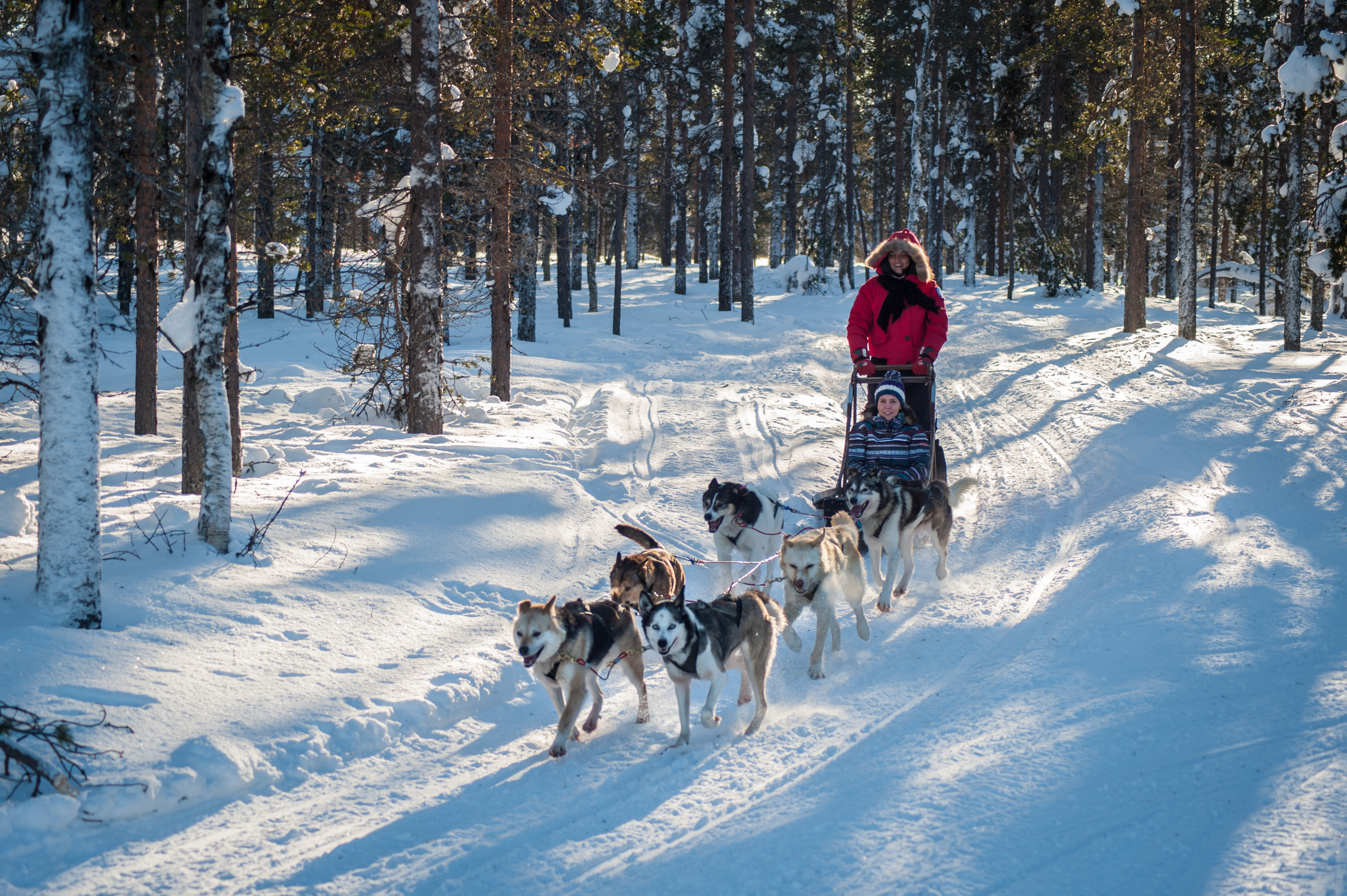 Husky-ride-sledge-dogs-lpl.jpg