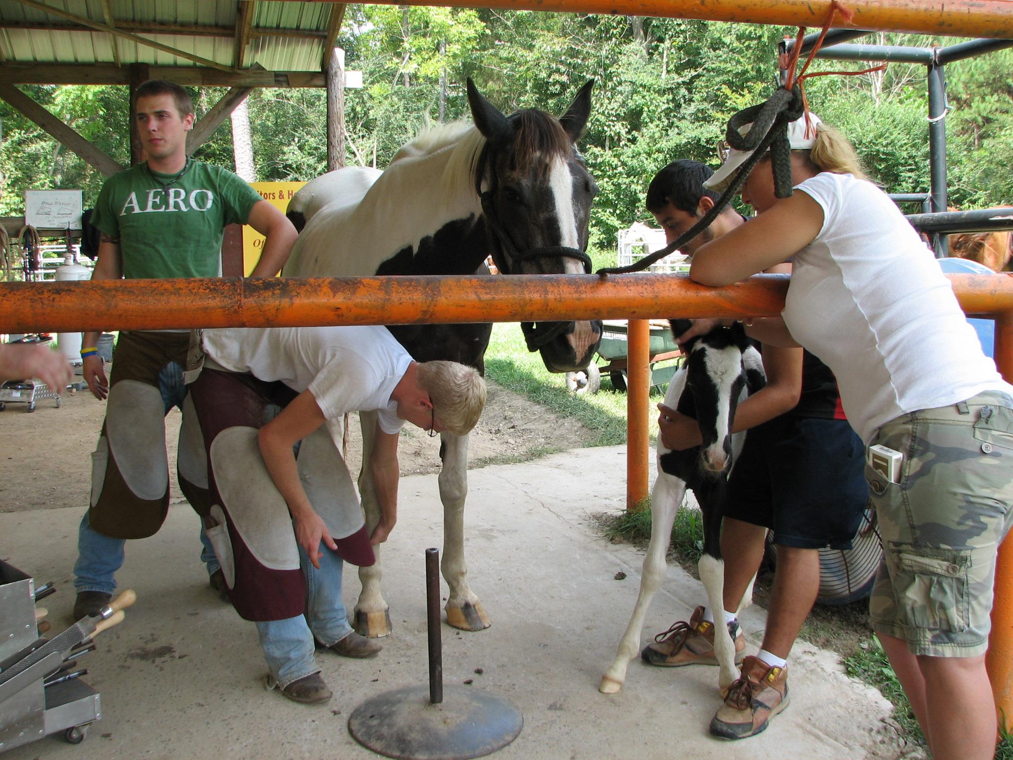 Gonzales foal 9.13.09 009.jpg