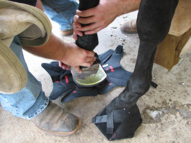 Bell, Eddie Greeson, Hoof Wraps 7.25.2011 026.jpg