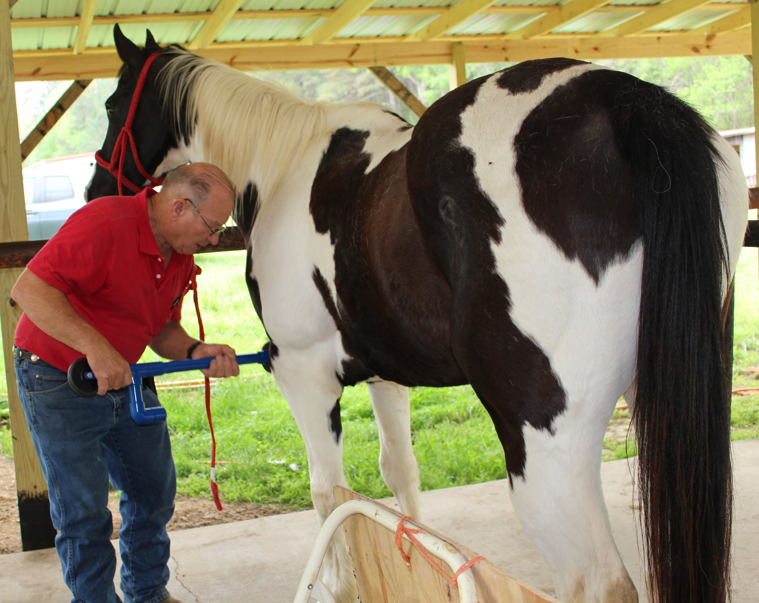 Dan Marcum, EFT Instructor, demonstrating his patented D-Stressor Tools on Horses.