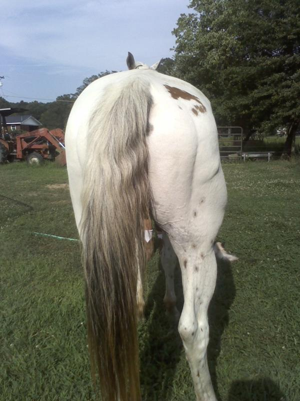 Hips after Equine Flexion Therapy, stretching and massage.