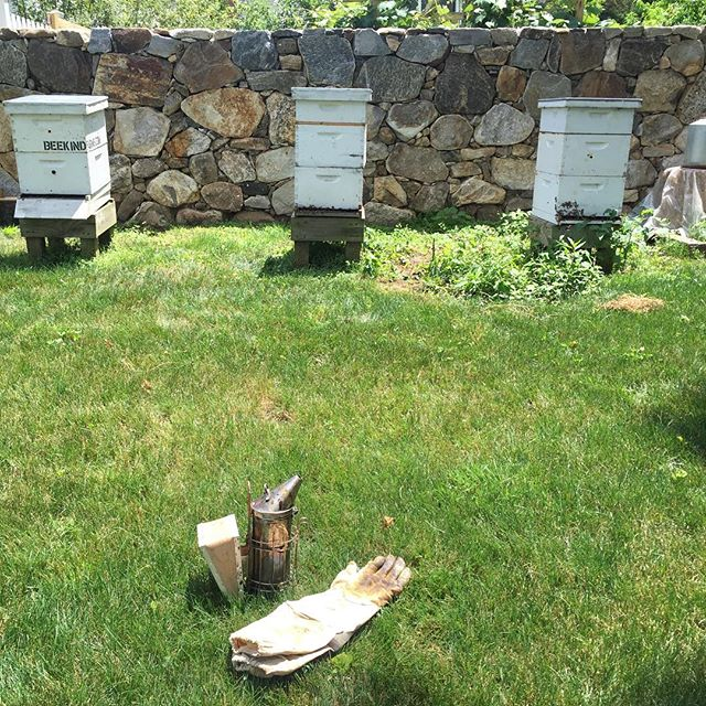 #honey #bees #hive #pollen #propolis #wax #royaljelly #beevenomtherapy #wildflower #wildflowerhoney #honeyharvest #connecticut #fairfieldcountyct #whoisyourbeekeeper #beekeeper @timcernigliajr #composting #treehouse #vegetablegarden #homestead