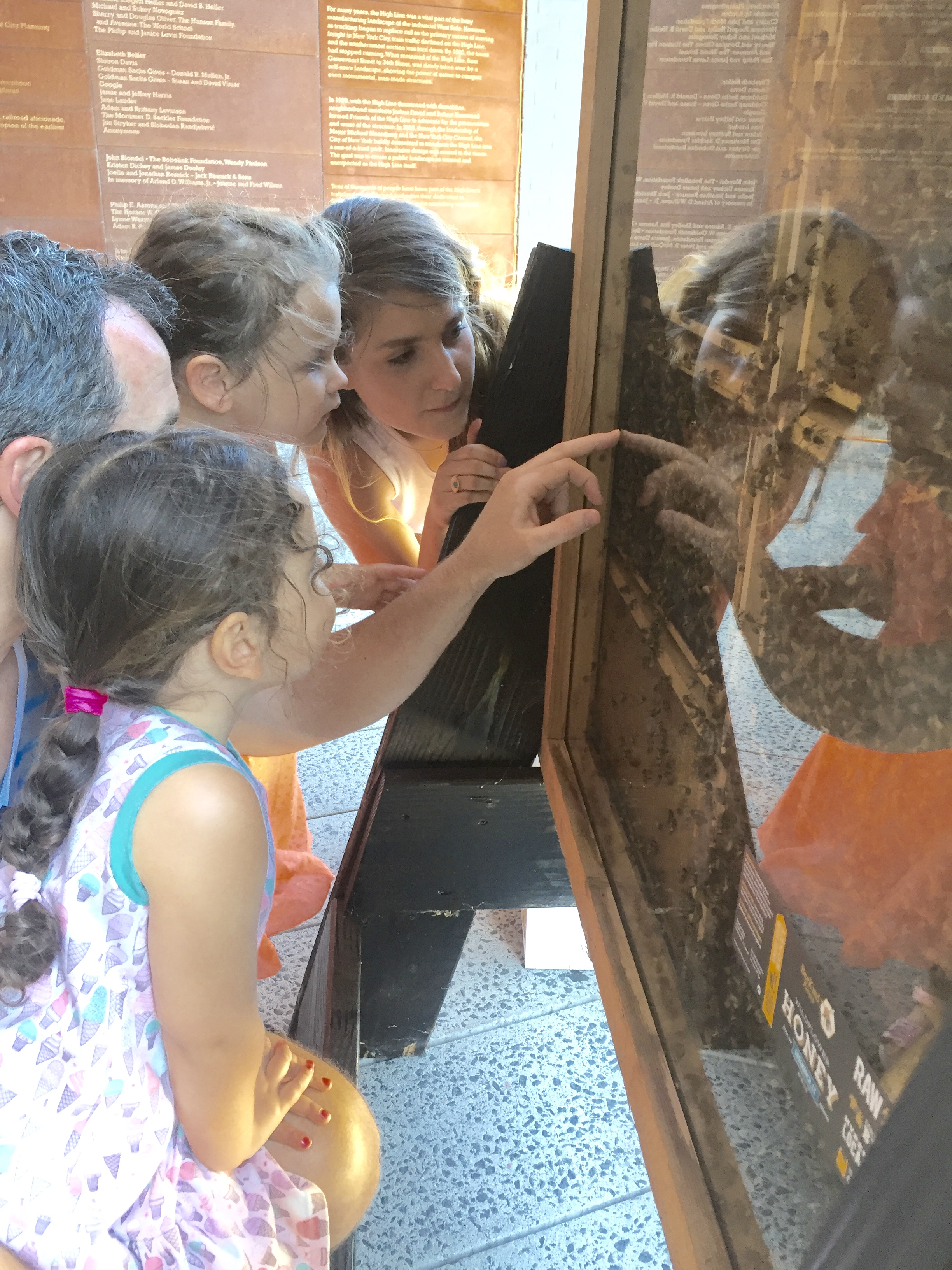A view through the safety glass of our 10 frame observation hive engages the attention of curious minds.  NYC Beekeeper, Billie, points out the various castes of bees inside the glass and explains their role in this eusocial colony that consists of a 90% female population.