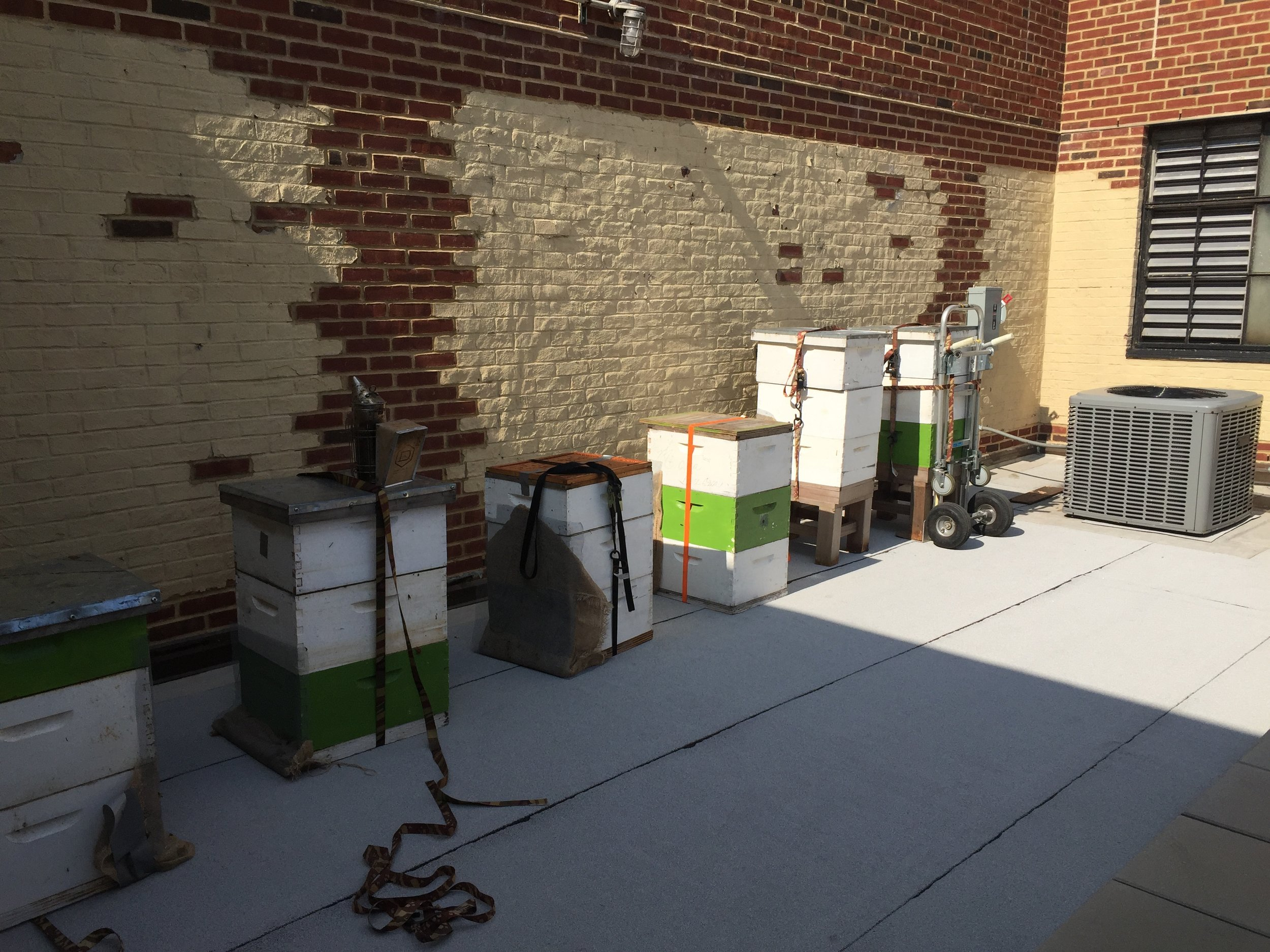 rooftop apiary being installed