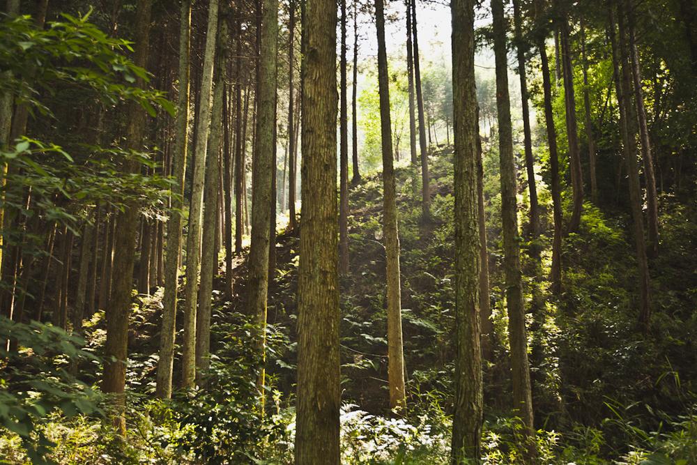 SHANNONPARAS_Japan_17.jpg