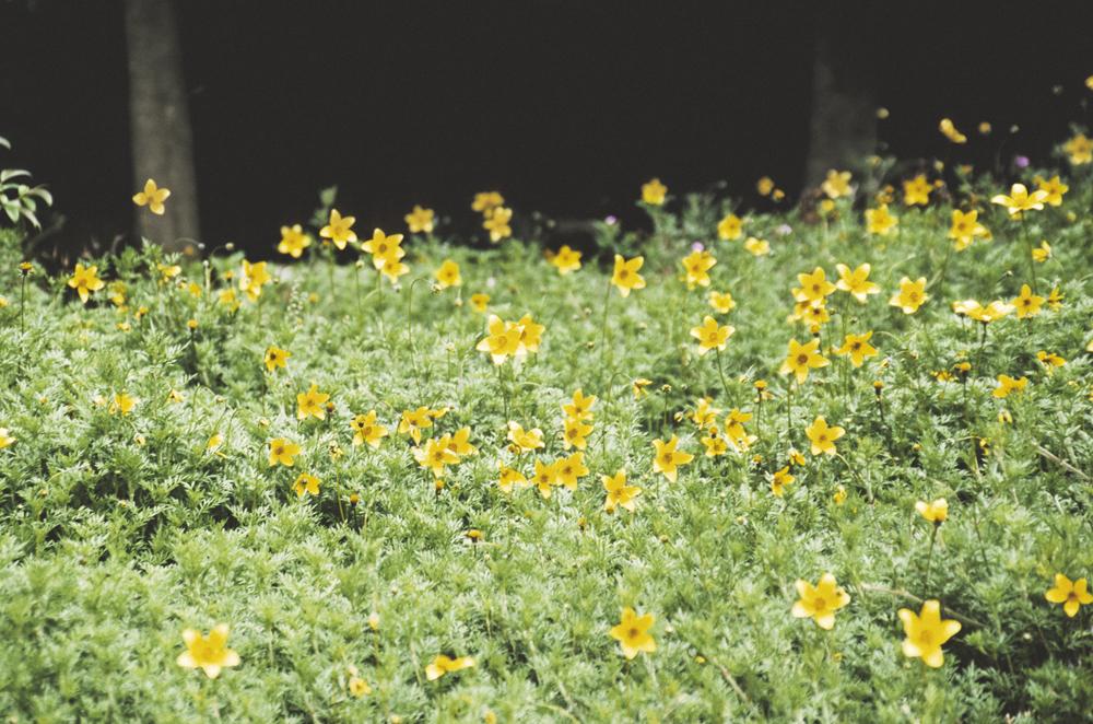 Laskey_Plants_007.jpg