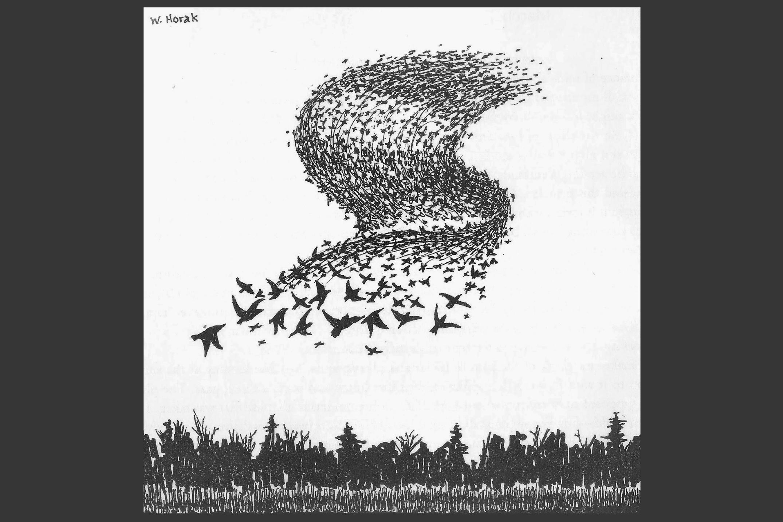 birds grey.jpg