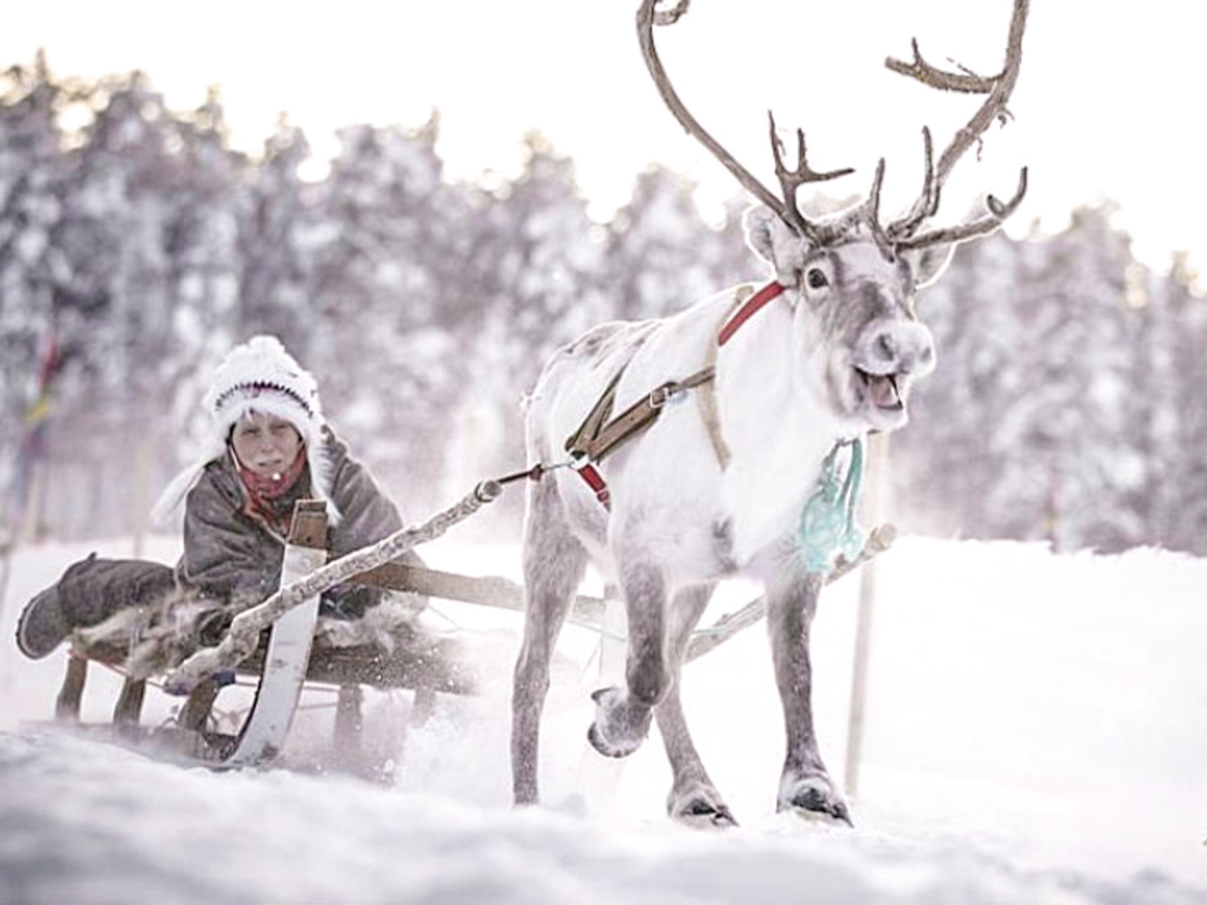 Sami and Reindeer experience  薩米少數民族和馴鹿體驗