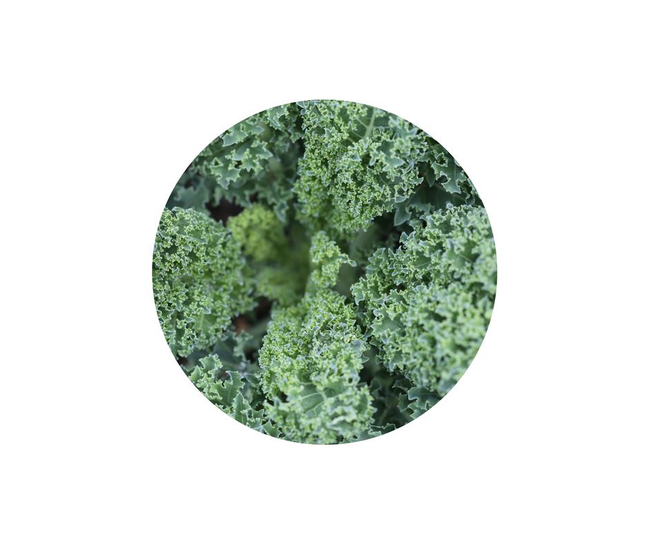 Kale Salad.png