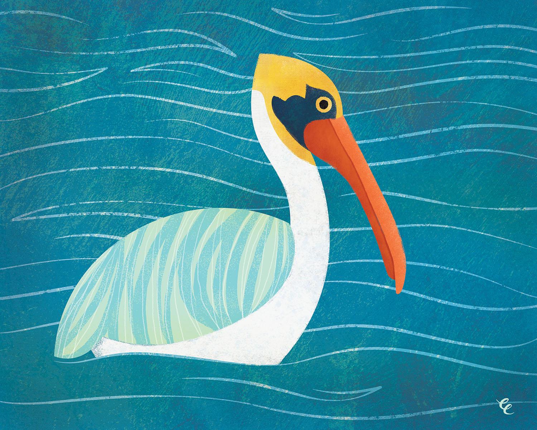 WEEK 22:  a Shifting Pelican