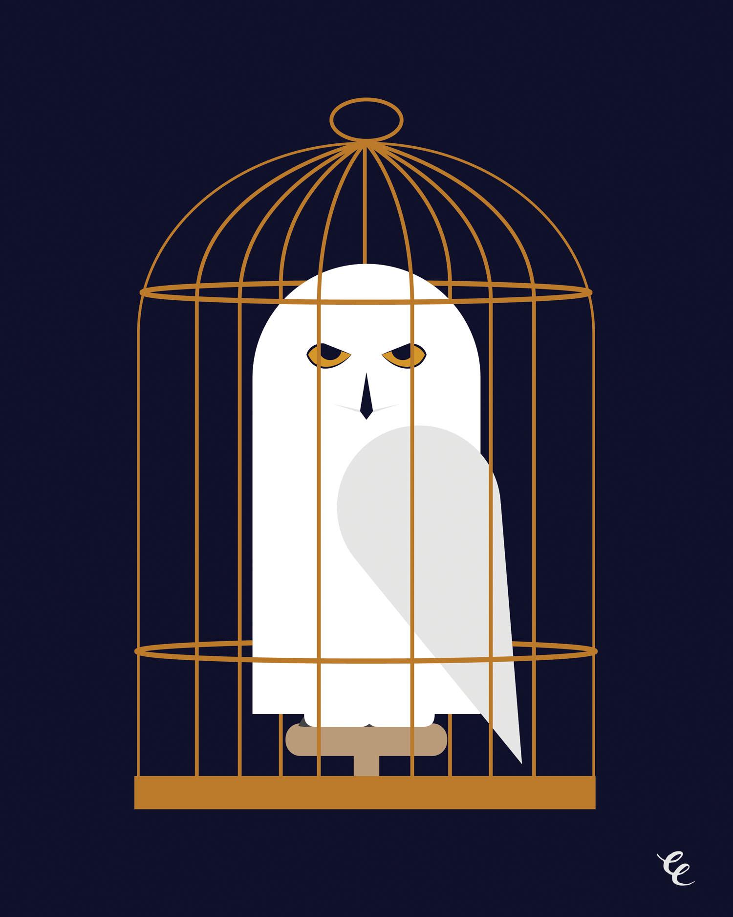 WEEK 24:  Hedwig: a magical owl