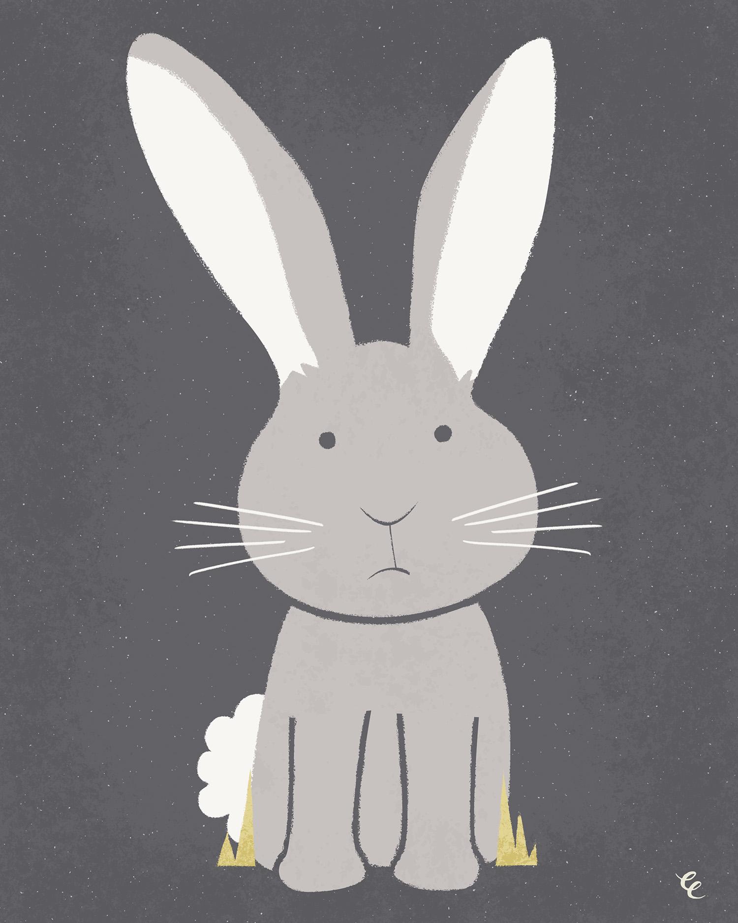WEEK 34:  a Rabbit