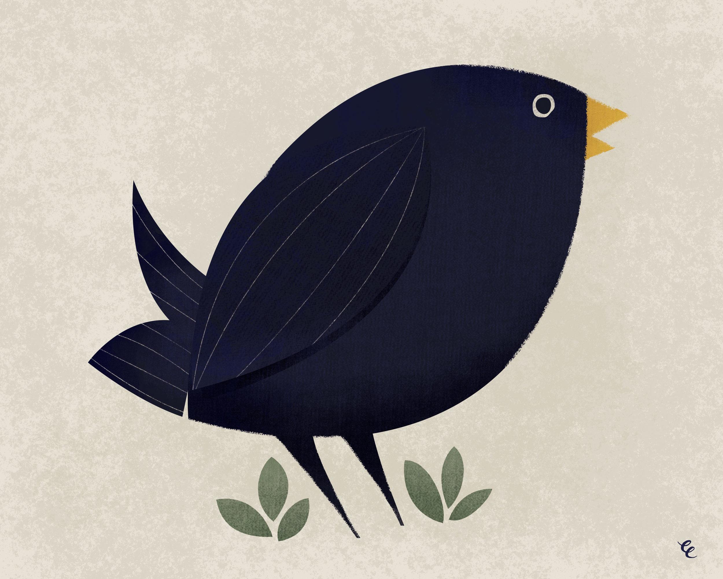 WEEK 42:  Blackbird