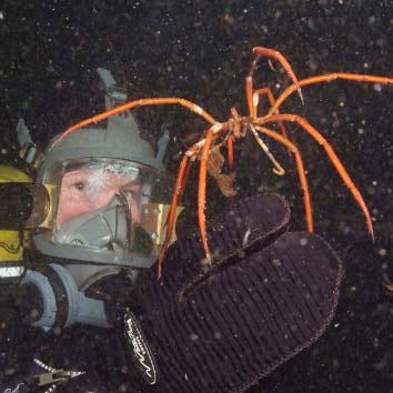 ash sea spider.jpg