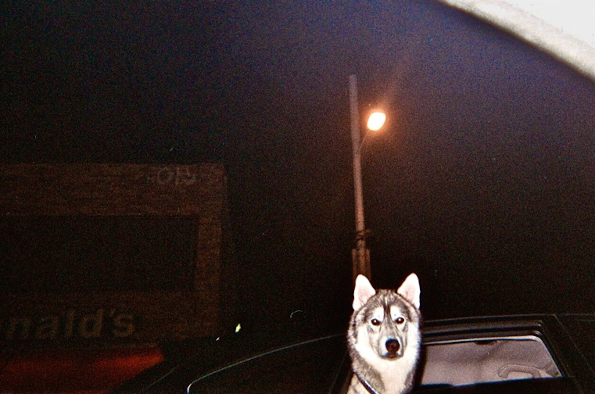 lindsay-dye-photography-art-boston-dog.jpg