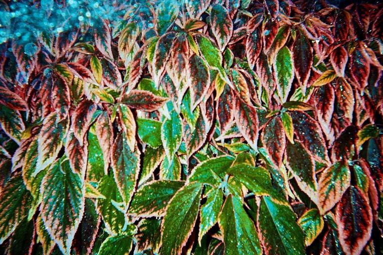 lindsay-dye-photography-art-fiu-plants.jpg