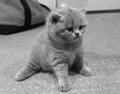 kitten.jpg