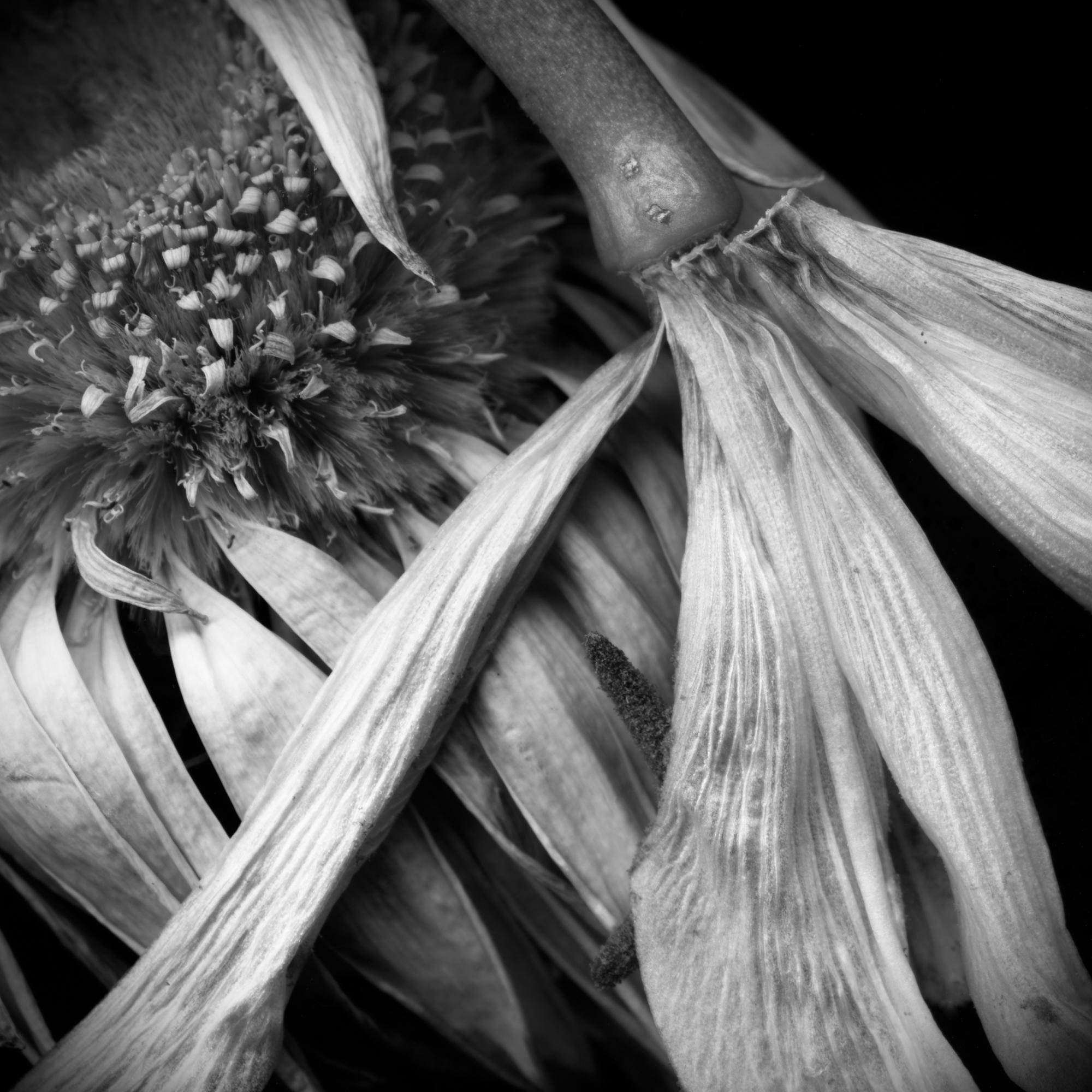 Mixed Flowers daisy lily MASTER.jpg