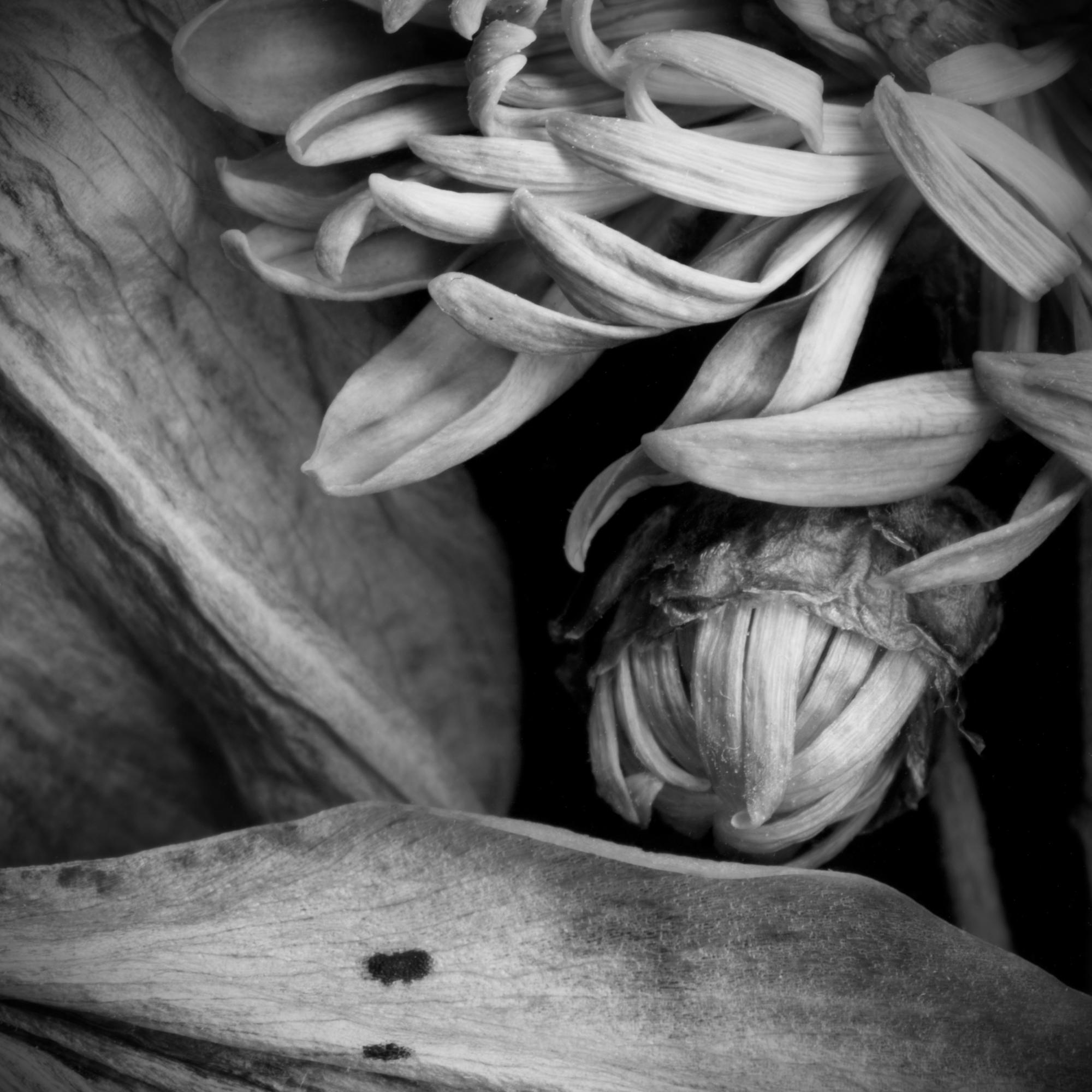 Petals MASTER.jpg
