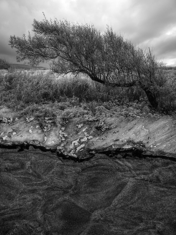 Constructed Landscapes Janet Matthews