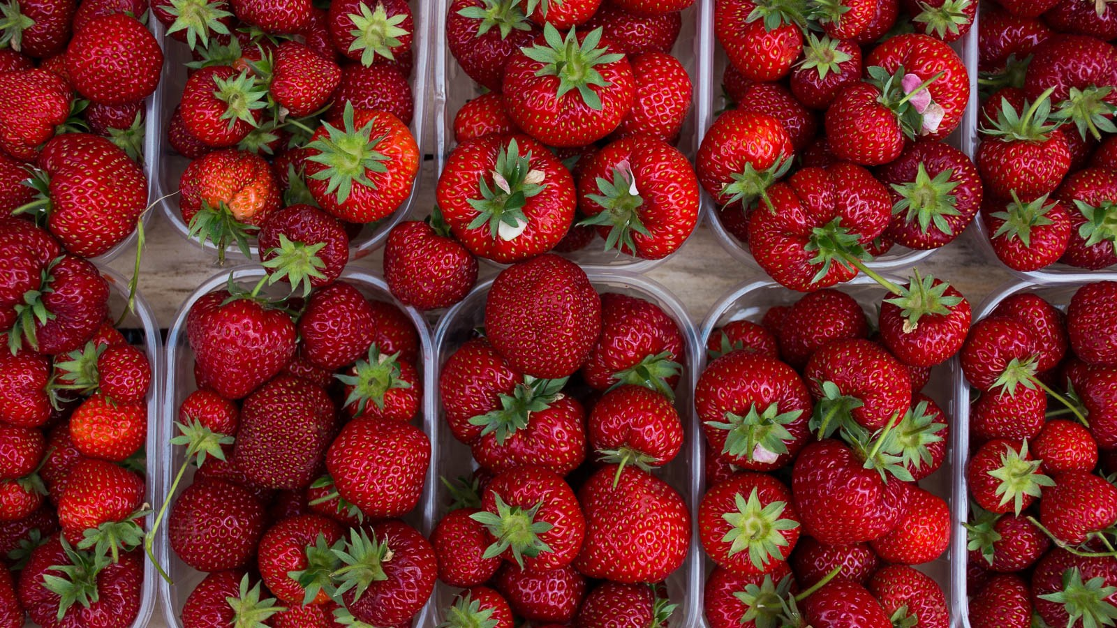 Terracina  strawberries in the Campo de Fiori, Rome