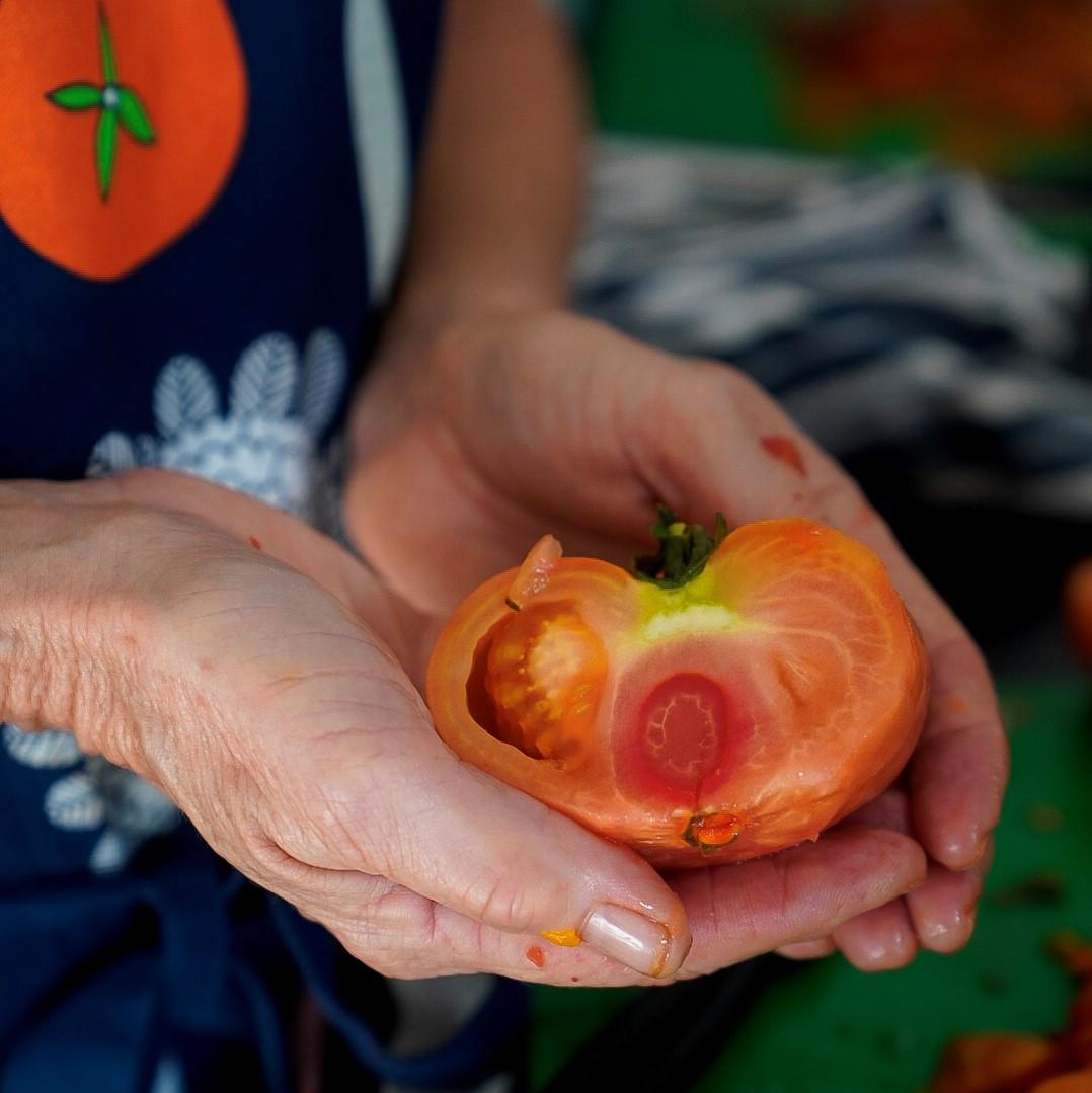 Tomato 4_sq.jpg