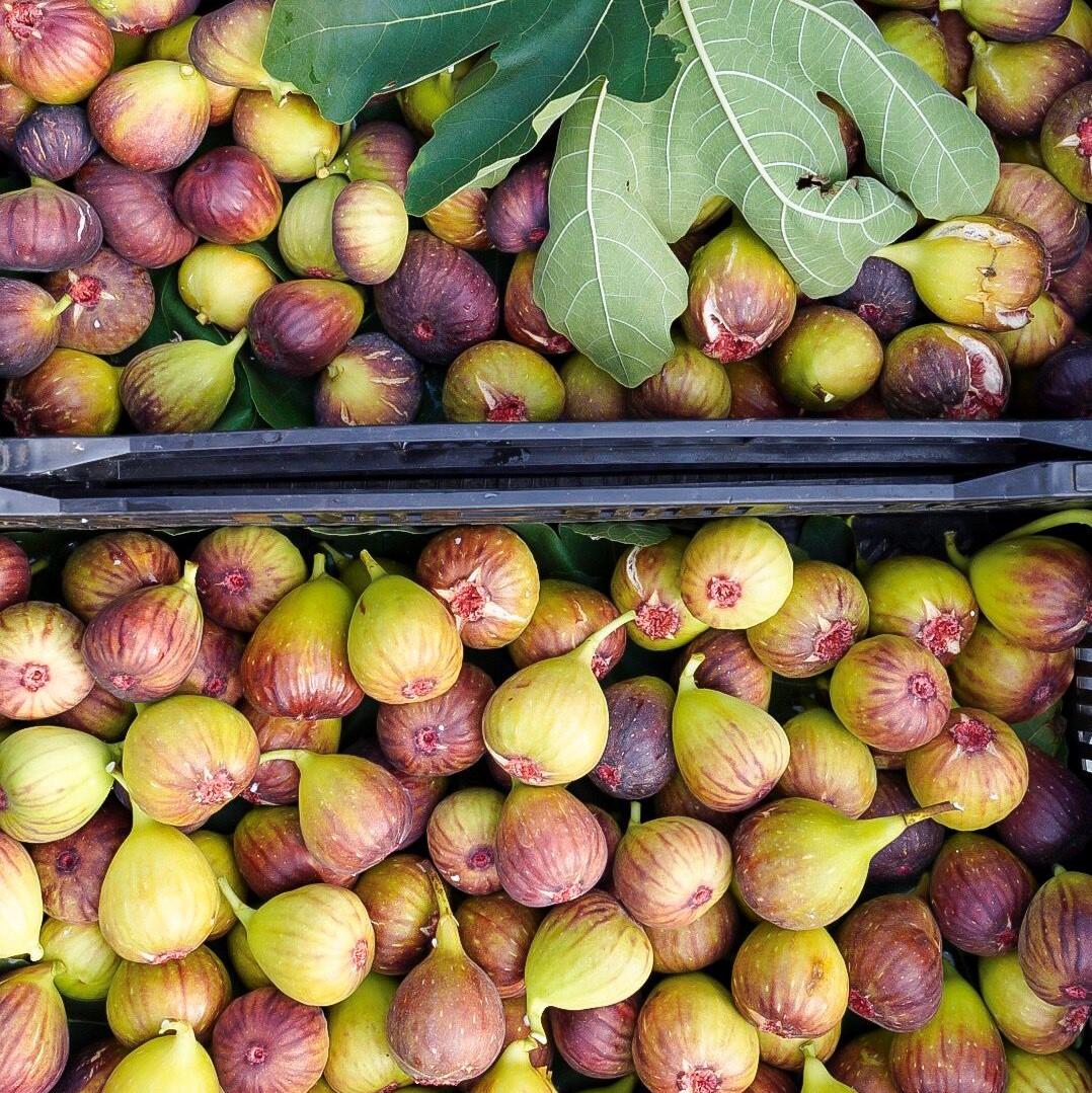 figs 2_sq.jpeg