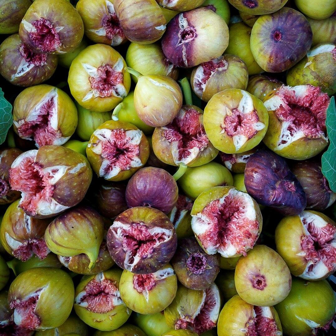 figs 5_sq.jpeg