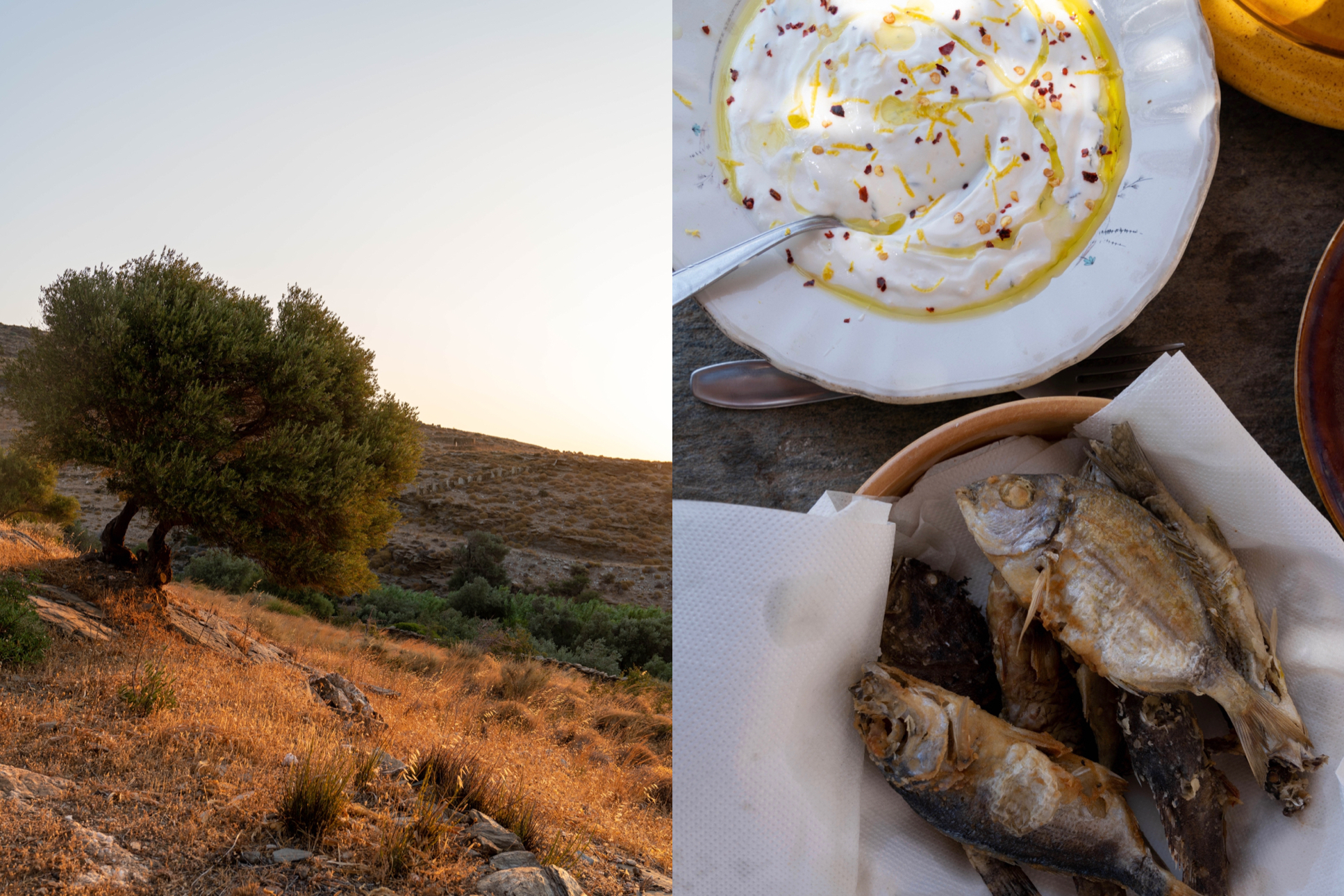 The Olive Garden, Andros, Cyclades