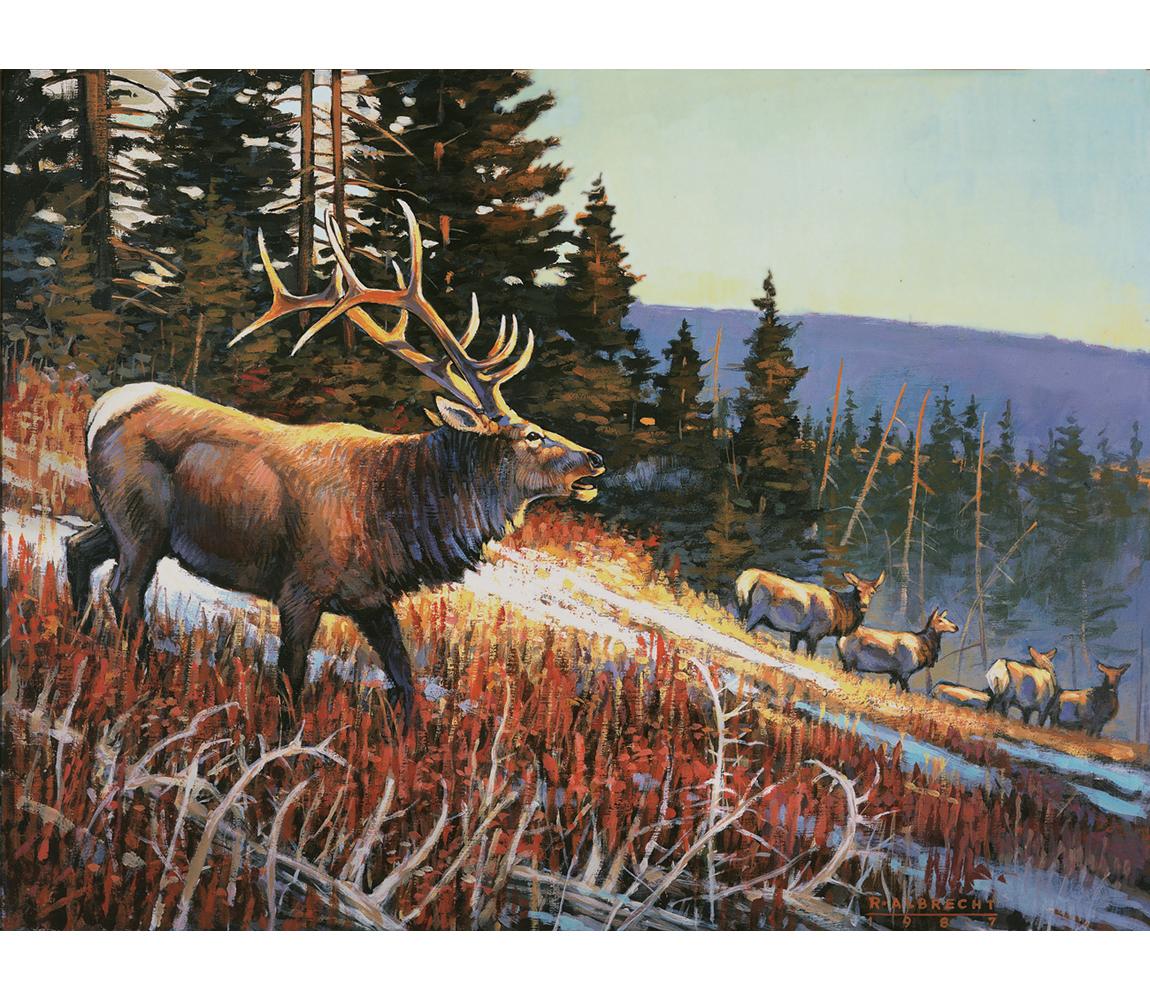 Courting Elk