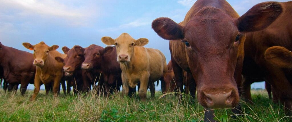 Schroeder Ag Law Blog - Leading issues affecting livestock production.