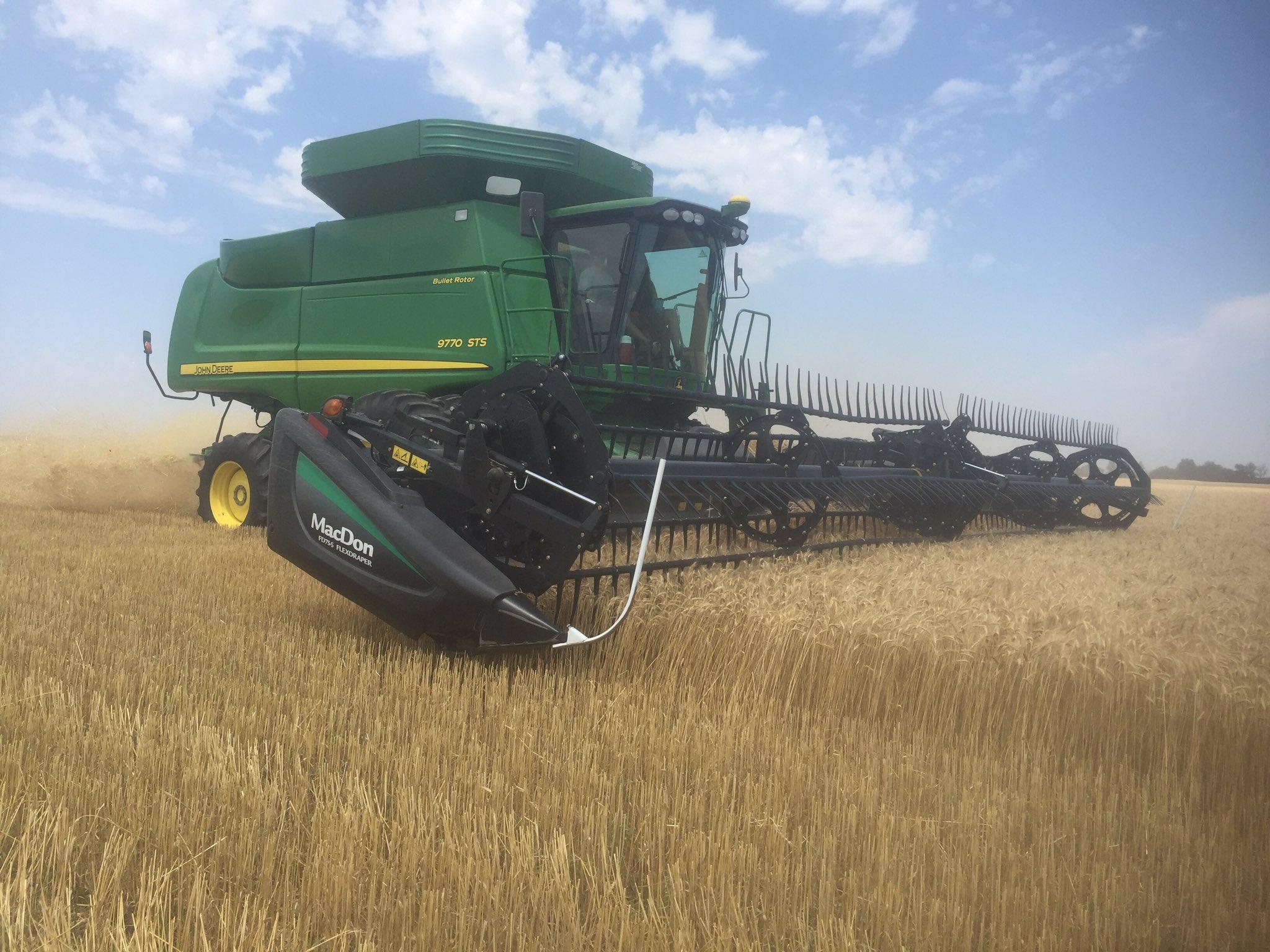 wheat field 2017.jpg
