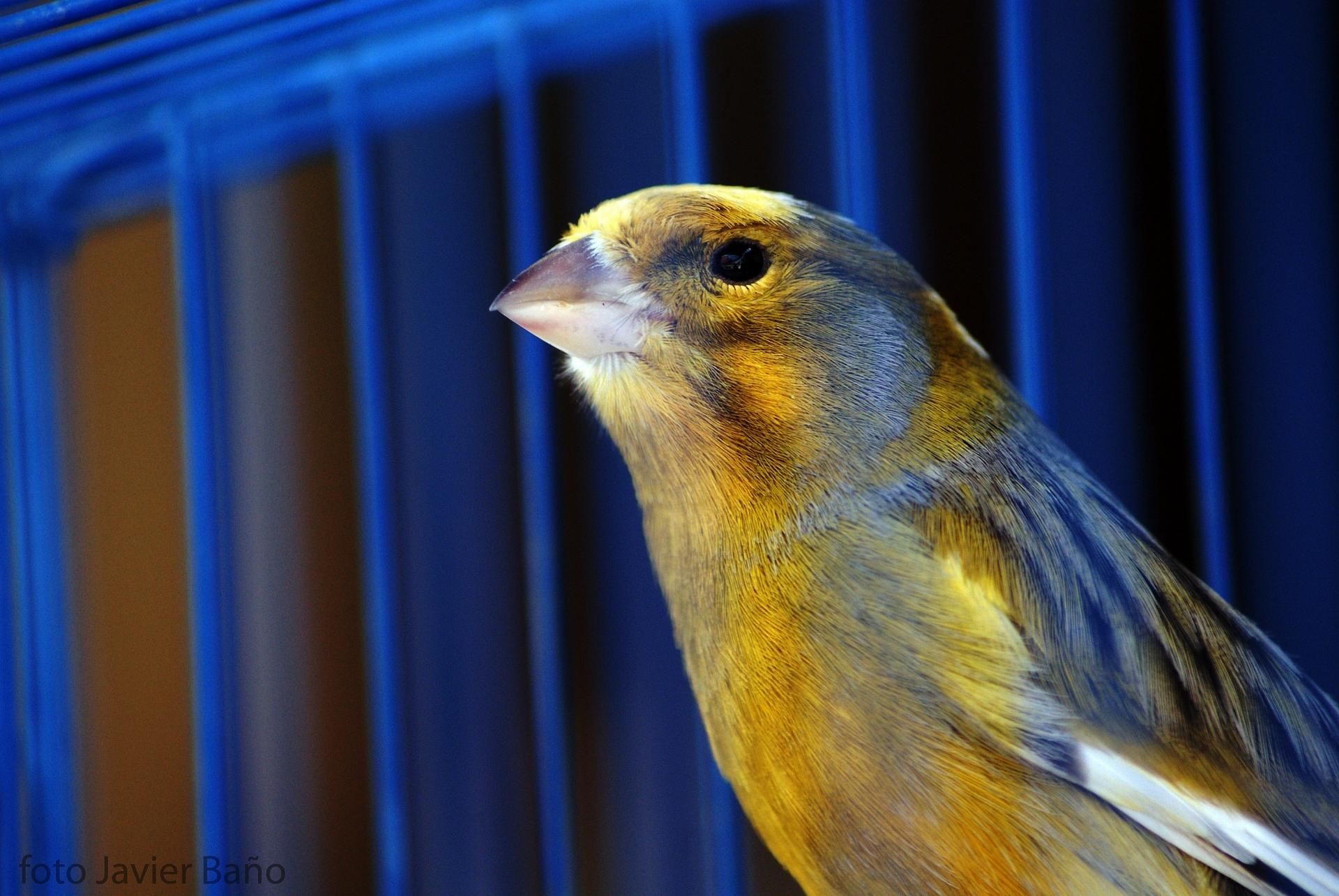 canary-20522_1920.jpg