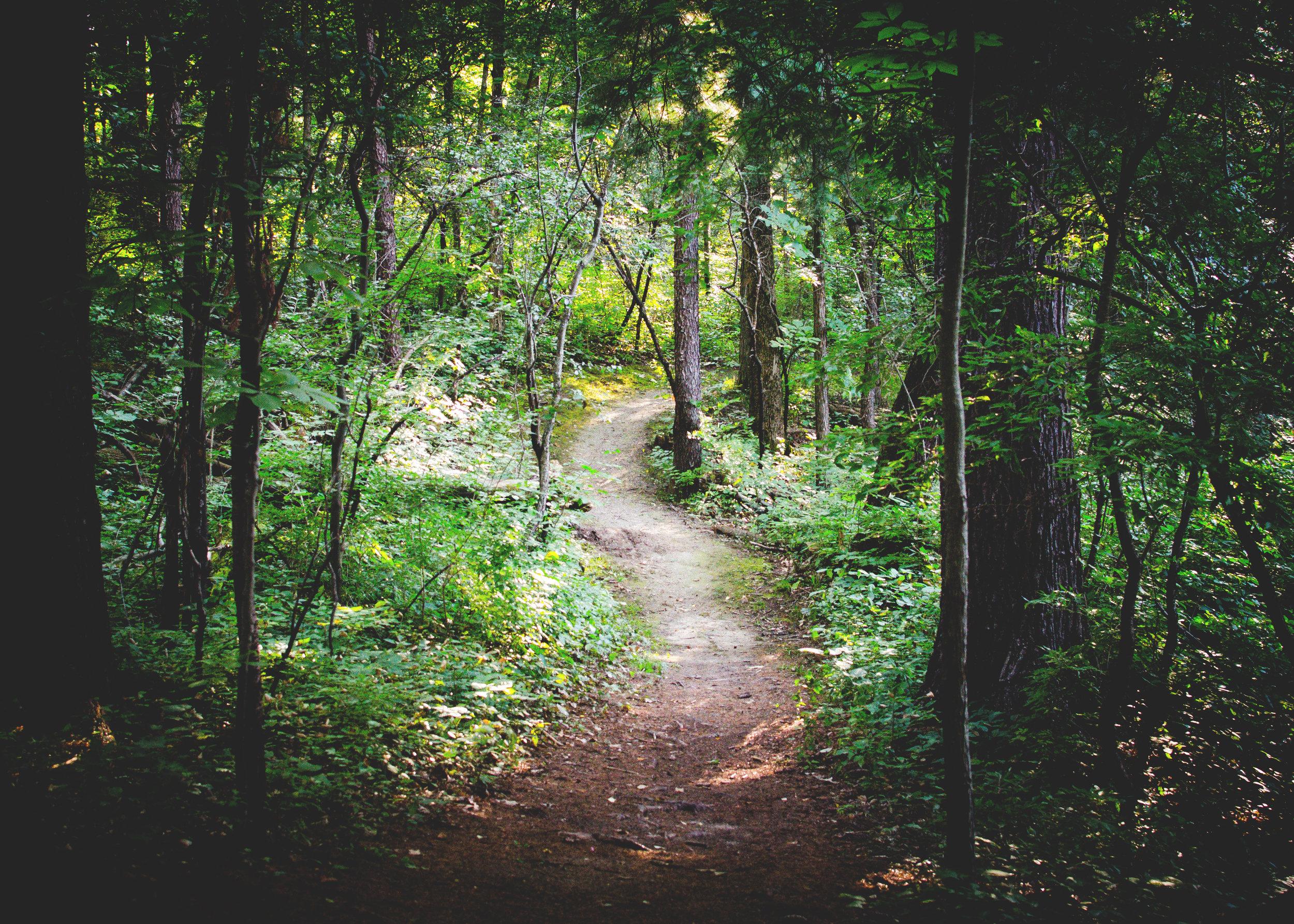 Copy of path-in-woods-unsplash-zack-silver-49053.jpg