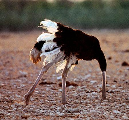 ostrich-ing vs tackling