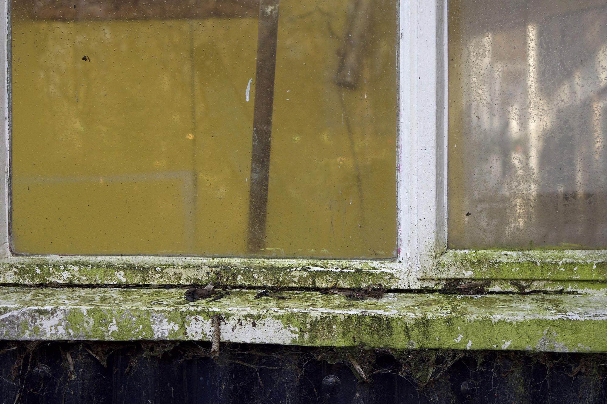 Eel Pie Window, 2014
