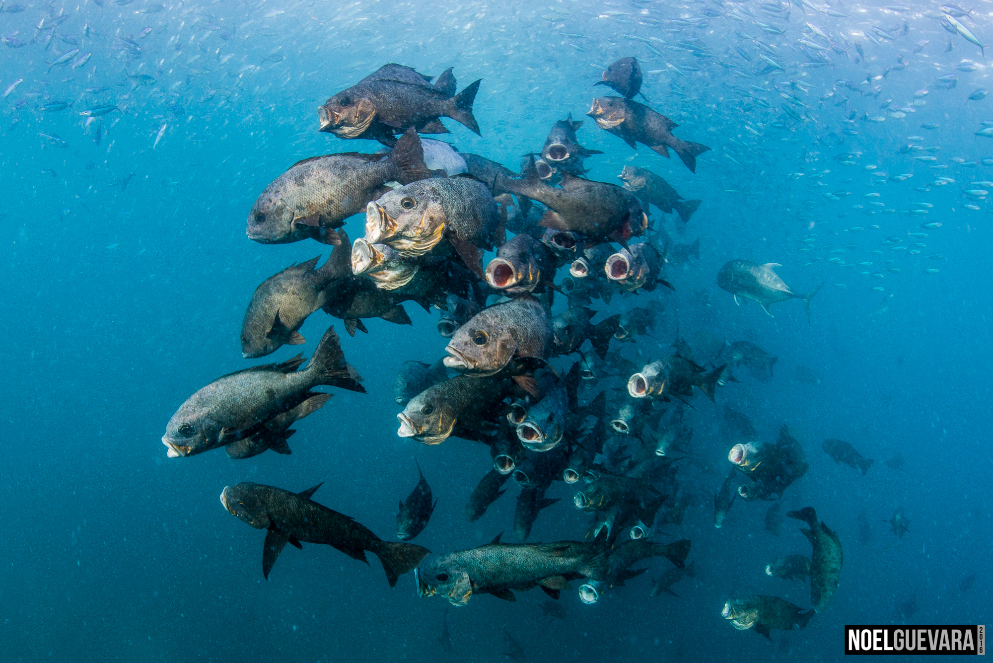 """The selected photo, entitled """"Fish Frenzy"""""""