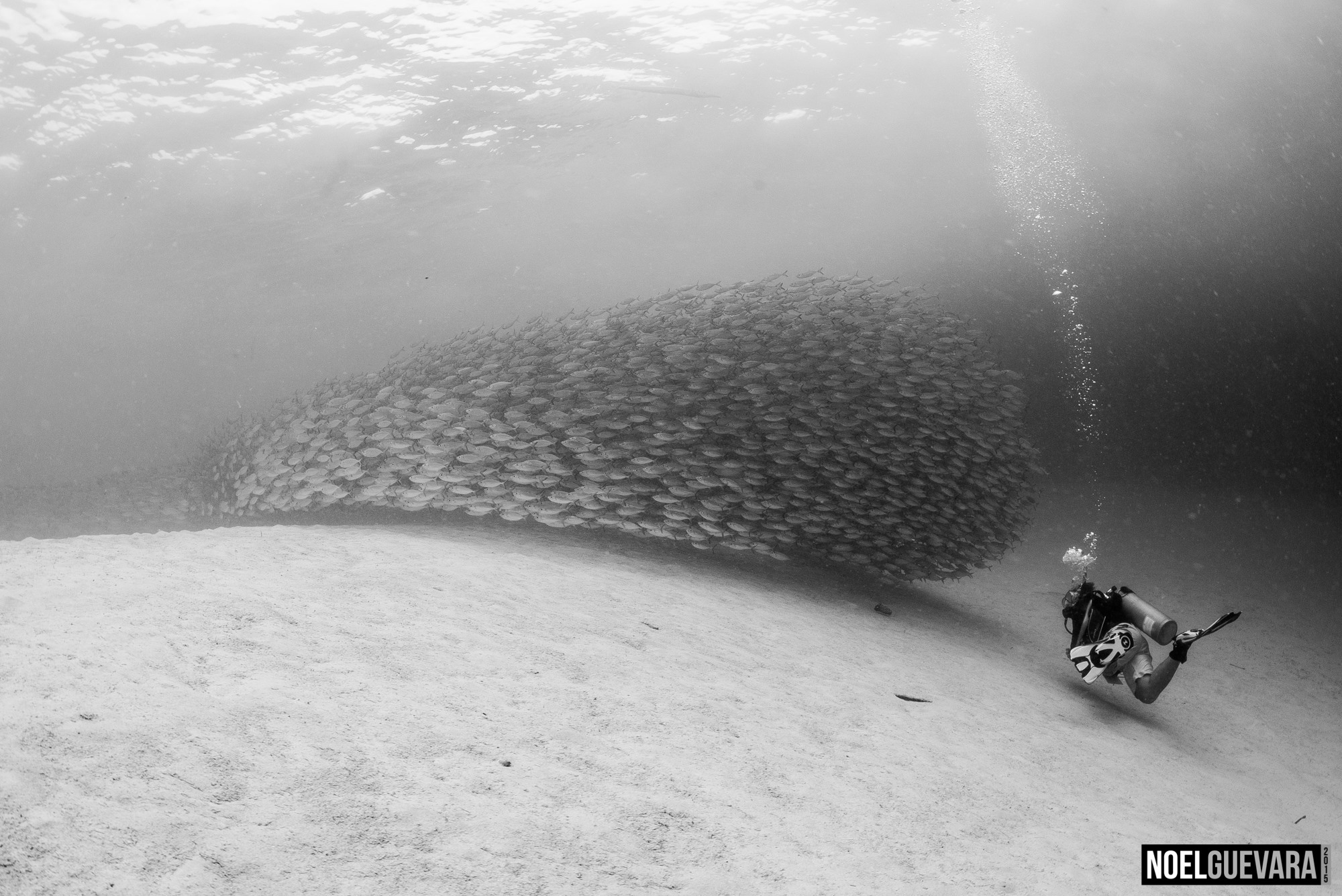 School of Scads and Diver, Club Paradise House Reef, Coron, Palawan