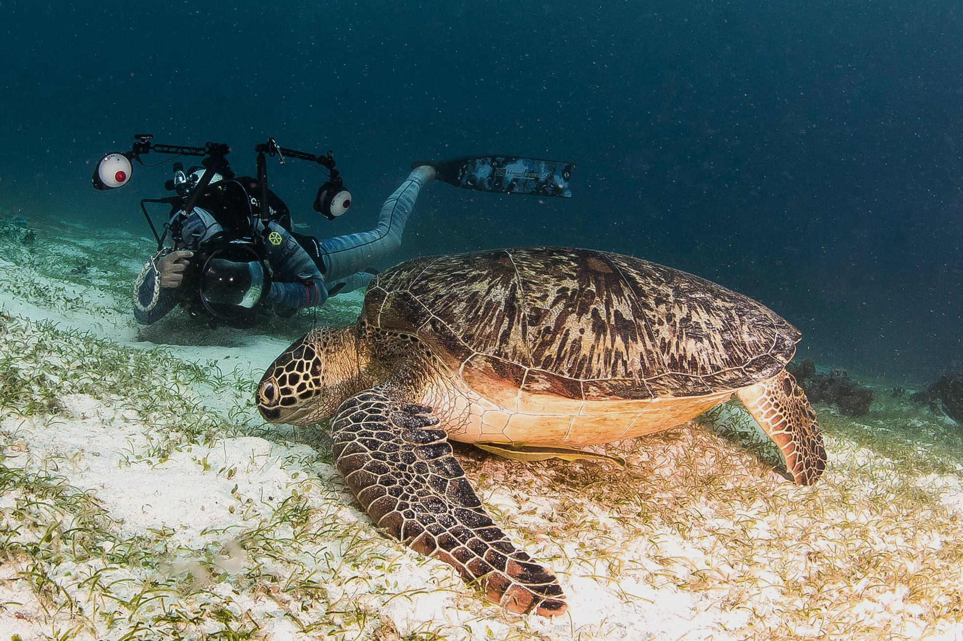 HECS - Announcement Photo - Turtle.jpg