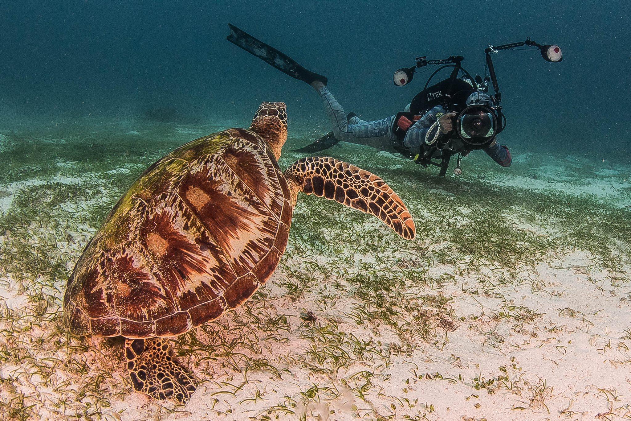 HECS - Turtle Foreground.jpg