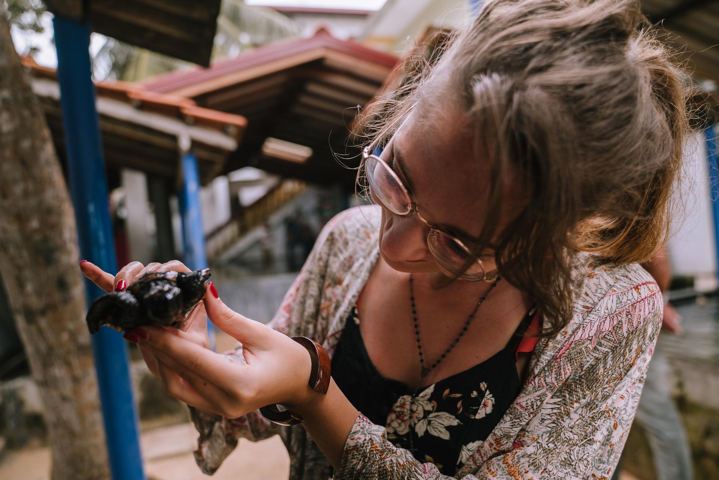 Centro di riabilitazione per tartarughe - Mirissa