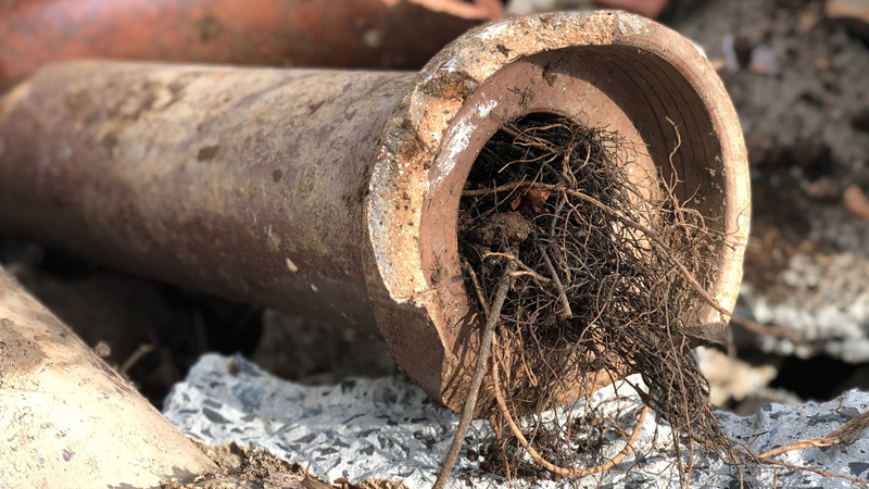 The tree root infestation in this Sydney sewer pipe was so bad that the pipes needed to be excavated and replaced. Biannual drain cleaning could have prevented this problem before the pipes were beyond repair.