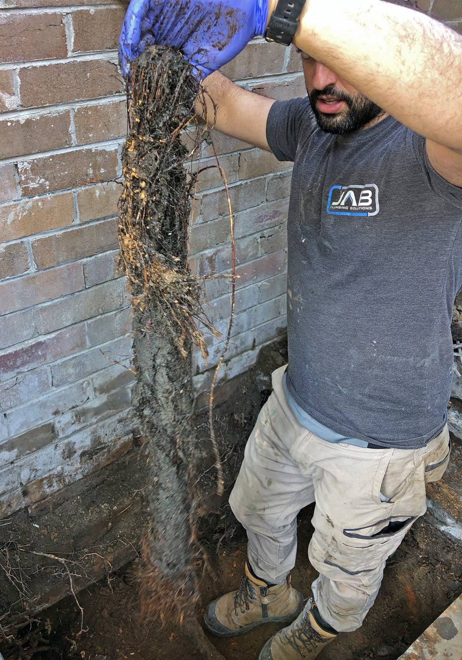 JAB Plumbing Solutions removing a large clump of tree roots blocking a drain in Sydney.